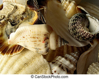 Shells - Seashells