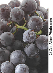 concord grapes 2 - concord grapes focus foreground fade to...