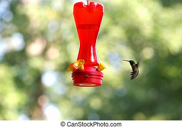 Hummer 4 - Wasp and humming bird on feeder