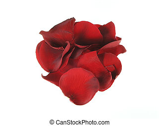 Rose Petals - Rose petals isolated over white.