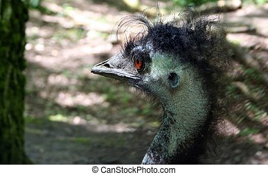 Bad Hair Day - An ostrich with a very bad hair-day