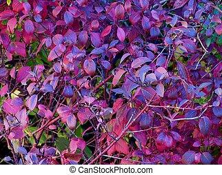Fall foliage - Colorful fall foliage