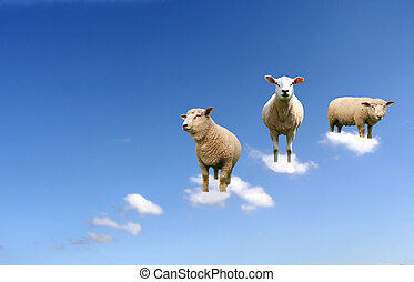 sheep in the air - A herd of sheep on clouds