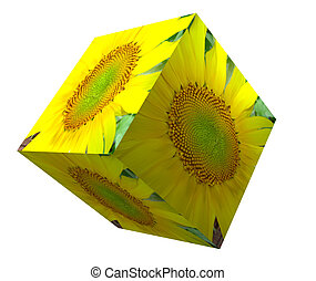 Block and sunflower isolated