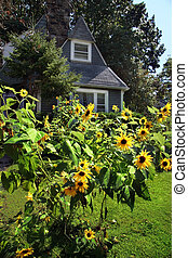 Country house with sunflowers