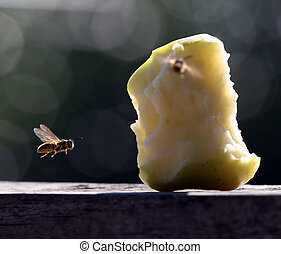 Apple Bee - Bee homing in on an apple core