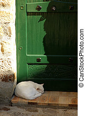 Cat Nap - Cat Sleeping In Front Of A Green Door