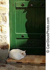 Cat Nap - Cat Sleeping In Front Of A Green Door