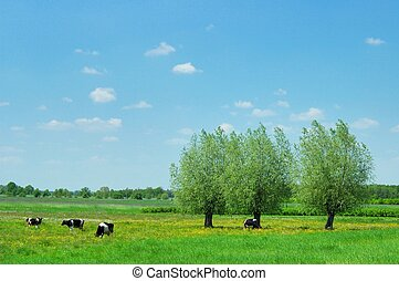 Summer Landscape - Trees and cows