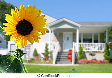 Bright sunflower in front of the house.