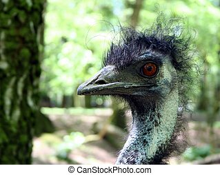 Bad Hair Day - An ostrich with a very bad hair day