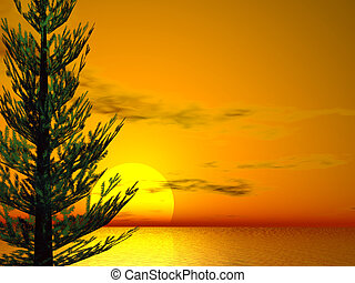 Pine Sunset - Brilliant sunset with pine tree