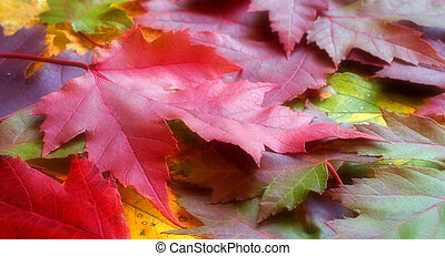 Fall Leaves - Photo of a variety of fall leaves
