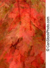 Fall Leaves 3 - Photo of a variety of fall leaves done in a...