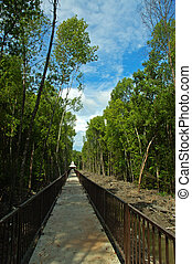 Path of nature - tropical path of nature