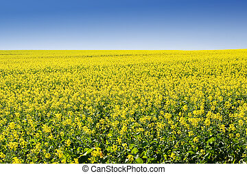 Farm 5 - Field of Flowers - Western Cape, South Africa