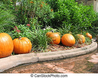 Pumpkins - Shot of several pumpkins on the ground as part of...