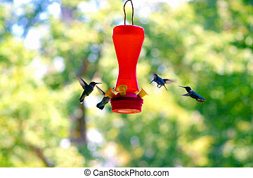 Hummer3 - a flight of humming birds feeding