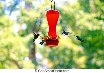 Hummer3 - a flight of humming birds feeding