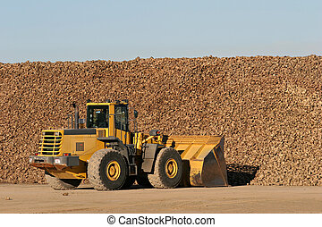 sugar beet being moved by bulldozer to a nearby processing...