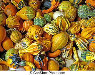 gourds - various gourds in the fall