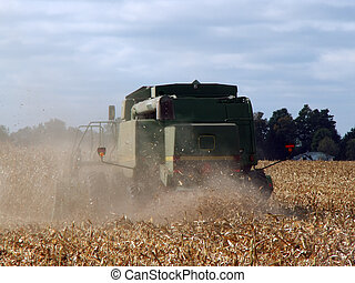 harvest time - tractor doing the fall harvest