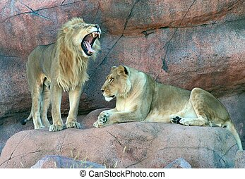Lions - A male and a female lion on a rock. The male lion is...
