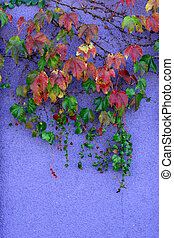 Autumn leaves against a purple wall