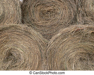Hay Bales - Round bales of hay. Fish Creek Park, Calgary,...