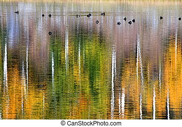 ducks on golden pond - ducks on glass calm pond with autumn...