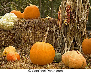 Harvest Display - This is a composition of some pumpkins and...