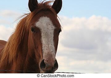 Sorrel Horse - A beautiful sorrel horse.  Canon Rebel XT.