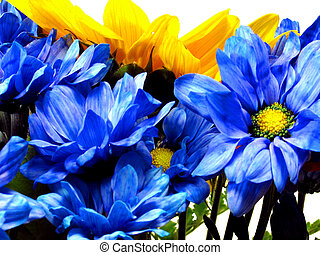 Flowers Up Close - Blue Daisies