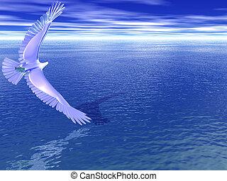 Silver Eagle Turning - Silver eagle turning over the sea
