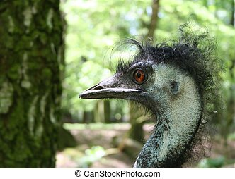 Bad Hair Day - An ostrich with a very bad hairday