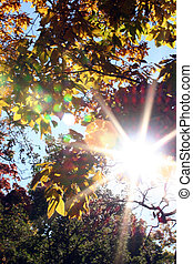 Autumn Sun - Brilliant colorful sun streaking through autumn...