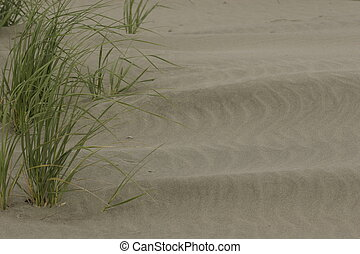 Sand grass - Grass growing in sand, would make a nice...