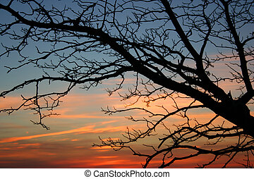 Bare tree at sunset in autumn