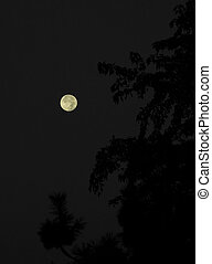 moon beyond the tree - moon on dark sky beyond the trees