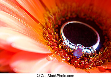 jewellery #2 - Close-up of engagement ring on a daisy -...