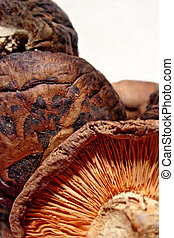 Mushrooms - Shiitake mushrooms