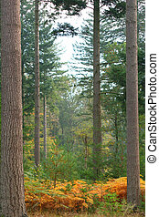 Autumn fern & forestAutumn fern & forest - Forest ferns in...