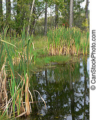 Pond and Cattails - Pond and cattails in Fish Creek Park,...