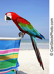 Beach Macaw - Red Macaw on the beach