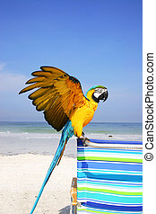 Macaw Beach - Blue and yellow macaw on the beach
