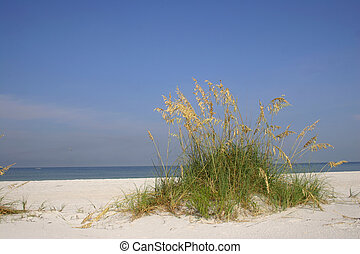 Sea Oats - Tussock of sea oats on tropical beach