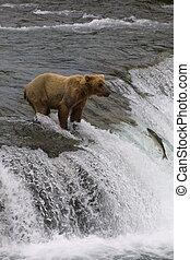 Little Bear Fishing