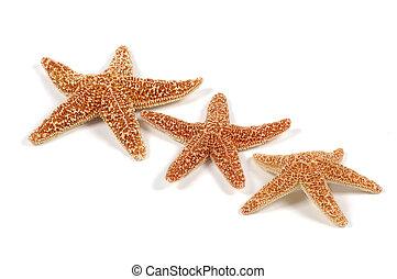 Starfish - Photo of Starfish