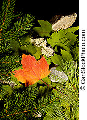Fall is at our doors - Very colorful orange maple leaf on a...