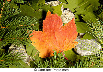 blank 3 - Bright orange maple leaf on a background of green...
